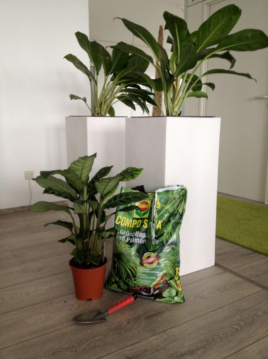 es gr nt so gr n zkdesign. Black Bedroom Furniture Sets. Home Design Ideas